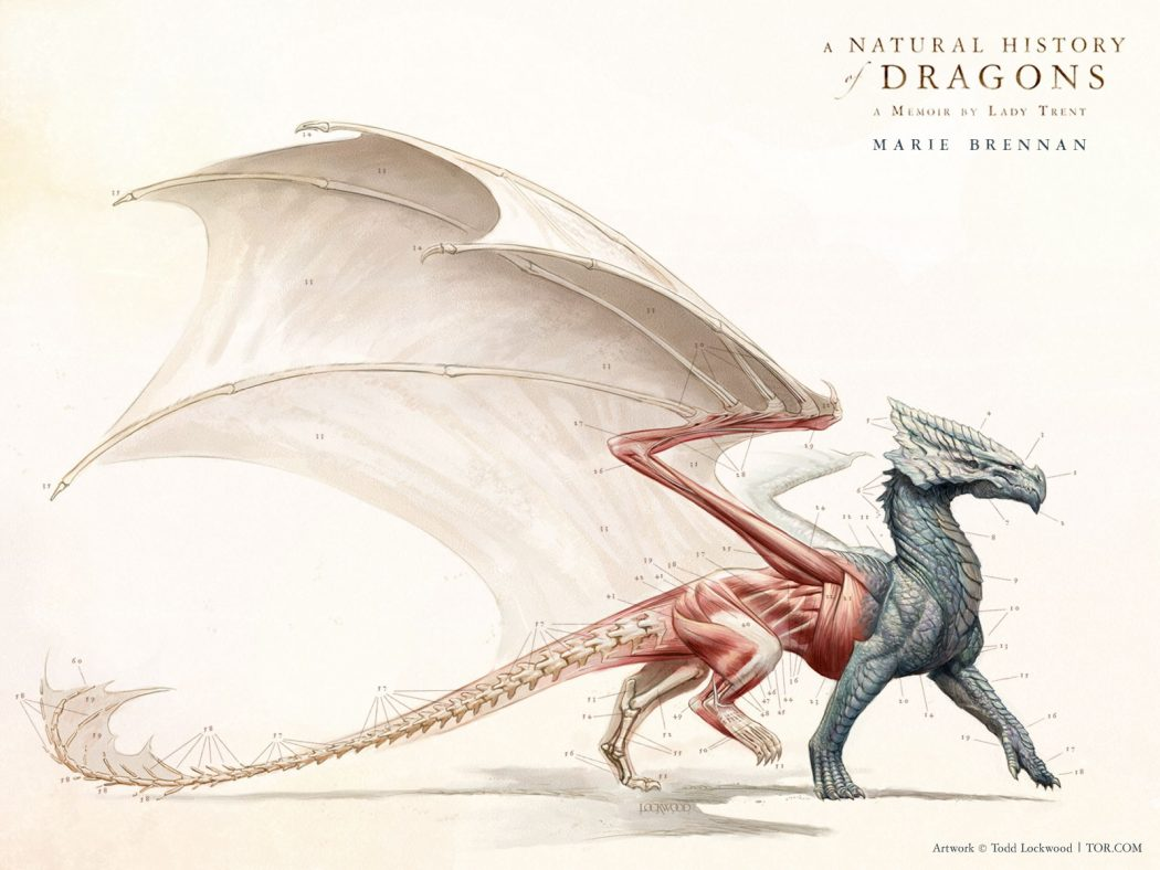 A Natural History Of Dragons cover