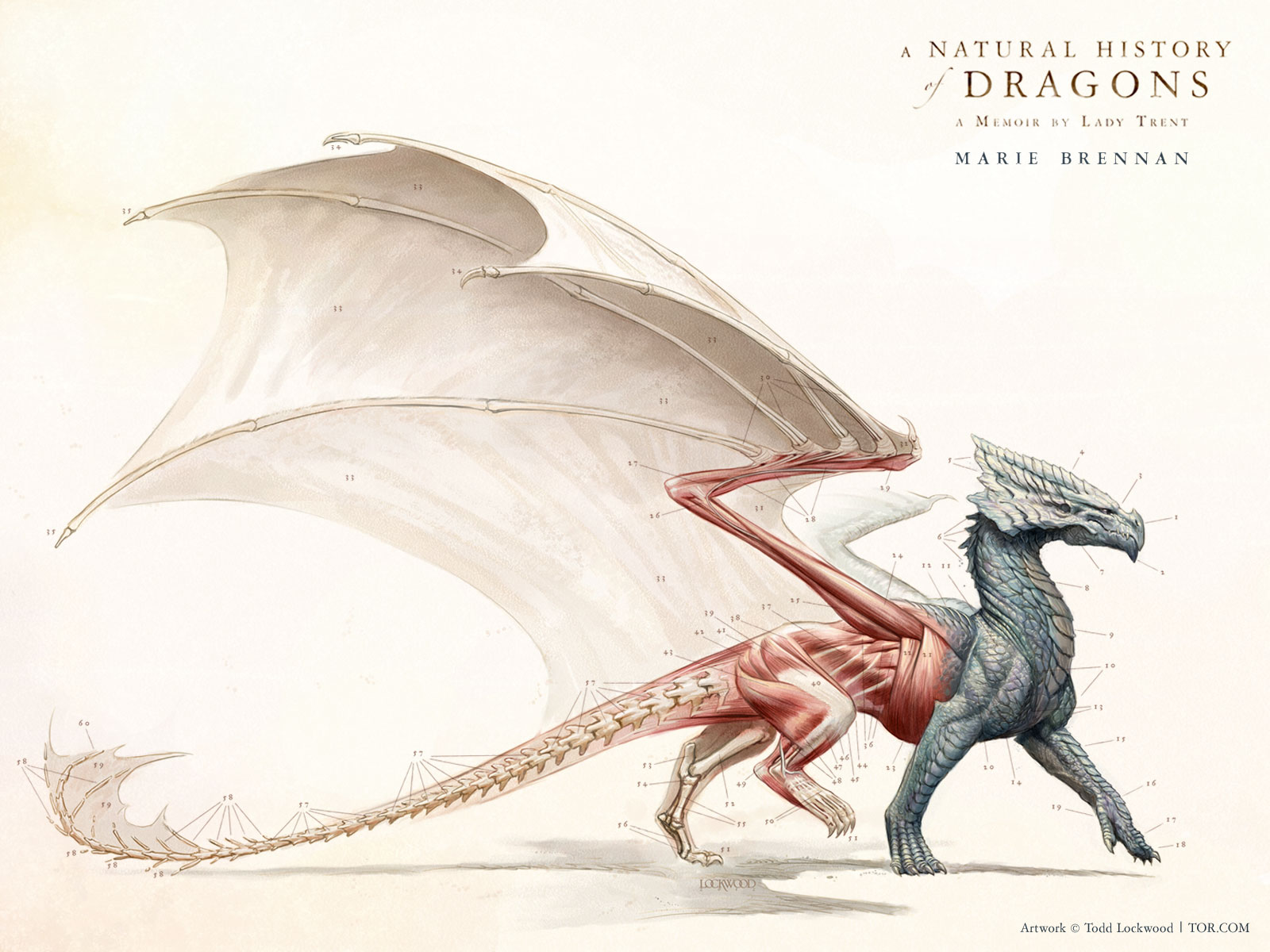 Book Review: A Natural History Of Dragons