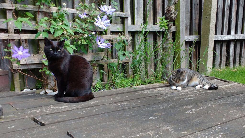 Cats relaxing in the garden