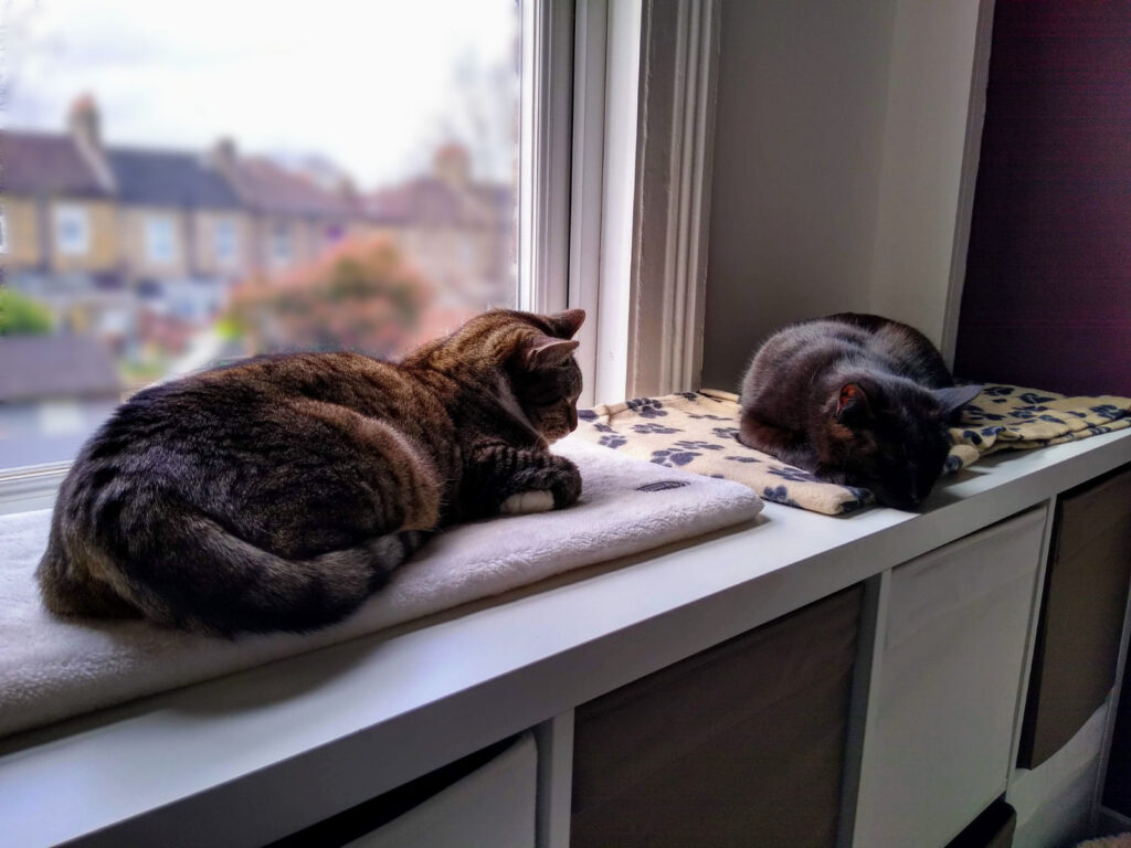 Cats sleeping in the office